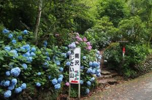 南沢あじさい山 (1)