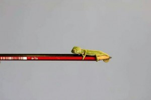 カメレオン 鉛筆