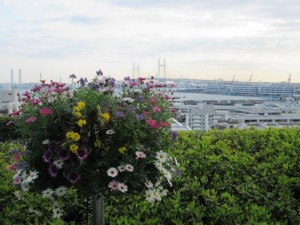 港の見える丘公園ベイブリッジ