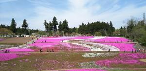 2017-04-20羊山公園~勝沼ツーリング (3)