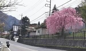 2017-04-20羊山公園~勝沼ツーリング (6)