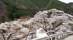 2017-04-20羊山公園~勝沼ツーリング (5)