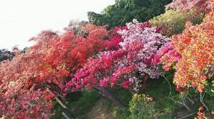 五大尊花木公園 (4)