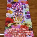 小鹿野ダリア園 (22)
