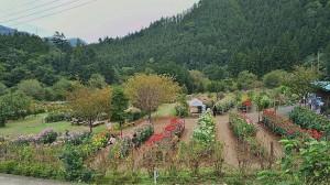 小鹿野ダリア園 (2)