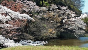 2019-04-04 皇居 通り抜け (14)