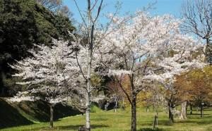 2019-04-04 皇居 通り抜け (21)
