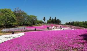 2021-04-22 芝桜の丘 羊山公園 (4)